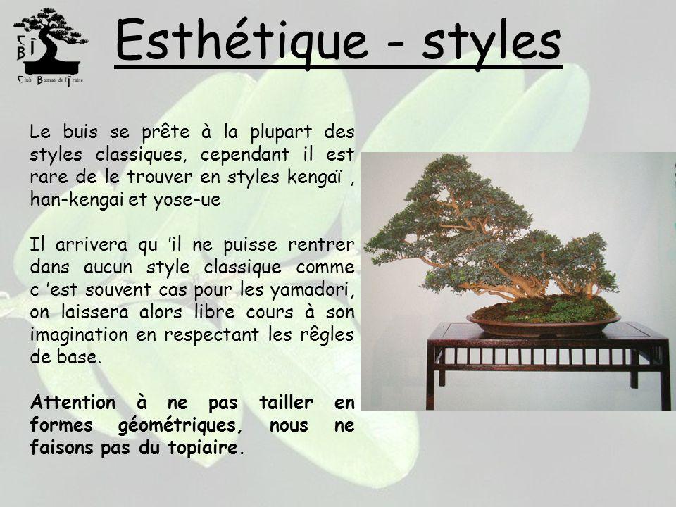 Esthétique - styles Le buis se prête à la plupart des styles classiques, cependant il est rare de le trouver en styles kengaï, han-kengai et yose-ue I