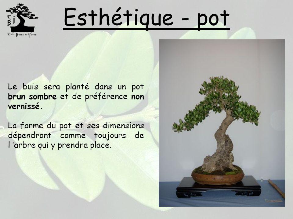 Esthétique - pot Le buis sera planté dans un pot brun sombre et de préférence non vernissé. La forme du pot et ses dimensions dépendront comme toujour