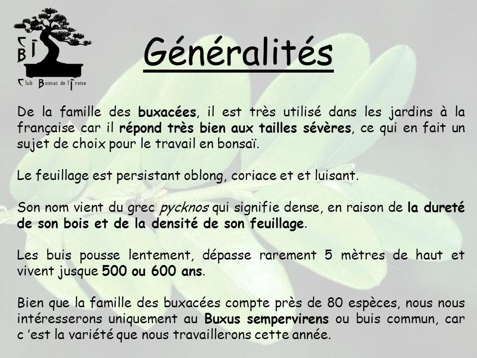 Généralités De la famille des buxacées, il est très utilisé dans les jardins à la française car il répond très bien aux tailles sévères, ce qui en fai