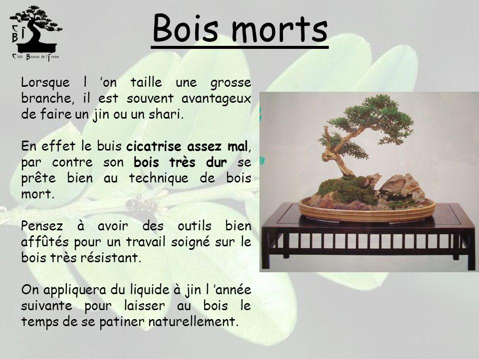 Bois morts Lorsque l on taille une grosse branche, il est souvent avantageux de faire un jin ou un shari. En effet le buis cicatrise assez mal, par co