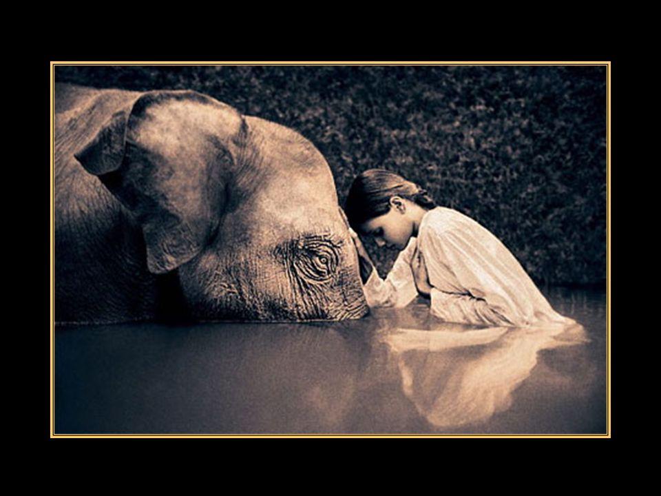 Mais le cœur humain na pas ta noblesse… Non ! pour toi, pas de cœur, pas de sentiments, Vois-tu léléphant, ils ont dit que tu étais trop grand, Que tu