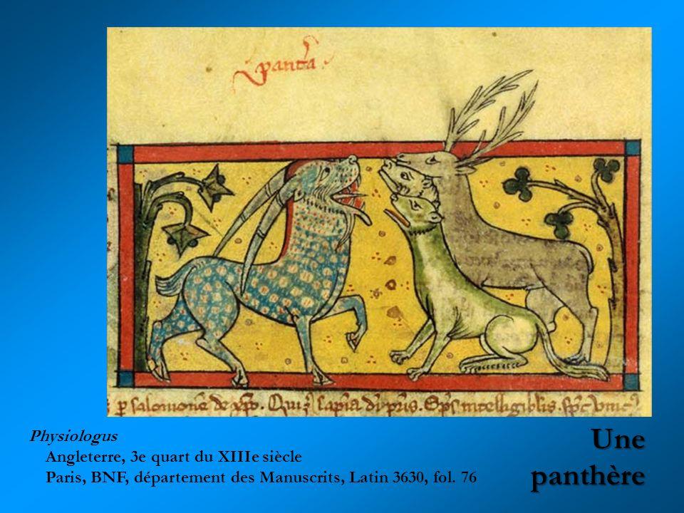 Une panthère Physiologus Angleterre, 3e quart du XIIIe siècle Paris, BNF, département des Manuscrits, Latin 3630, fol. 76
