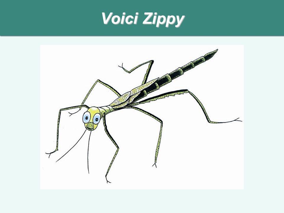 Voici Zippy