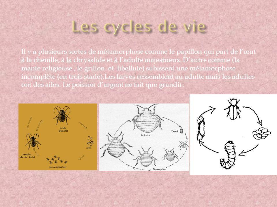 Il y a plusieurs sortes de métamorphose comme le papillon qui part de lœuf à la chenille, à la chrysalide et à ladulte majestueux. Dautre comme (la ma