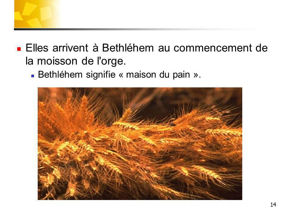 14 Elles arrivent à Bethléhem au commencement de la moisson de l'orge. Bethléhem signifie « maison du pain ».