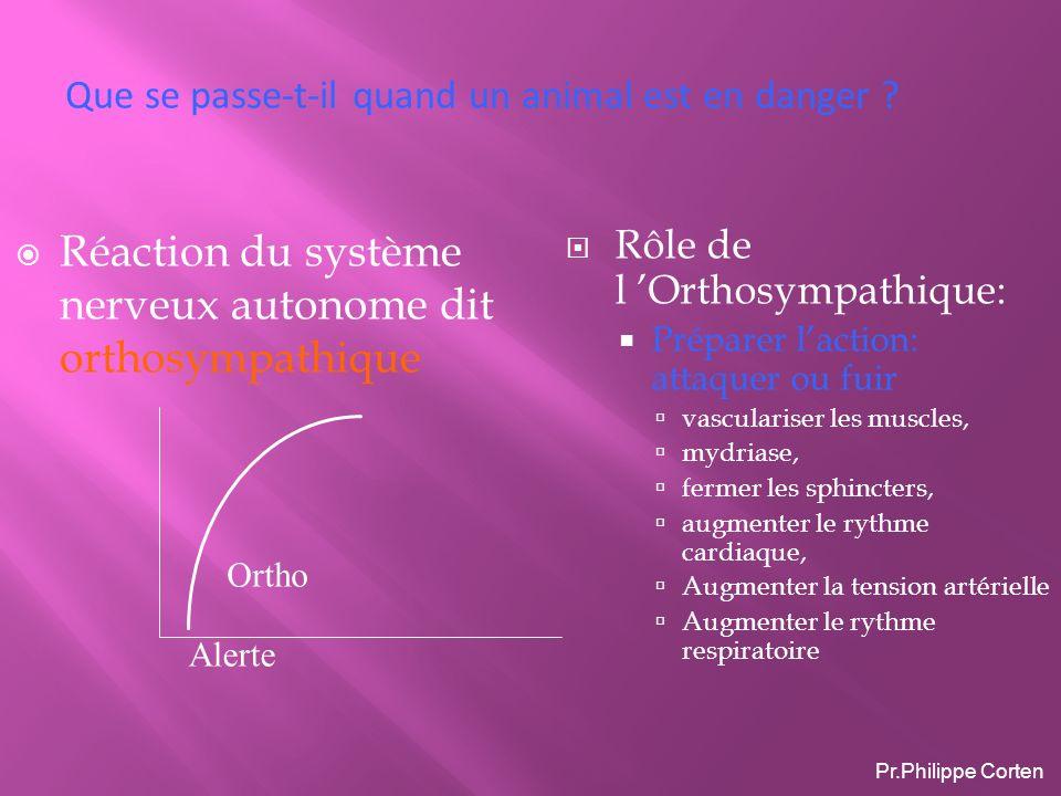 Réaction du système nerveux autonome dit orthosympathique Rôle de l Orthosympathique: Préparer laction: attaquer ou fuir vasculariser les muscles, myd