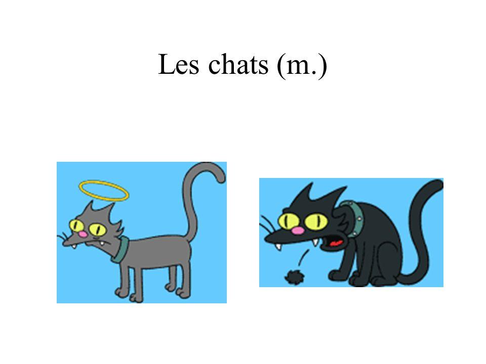 Les chats (m.)