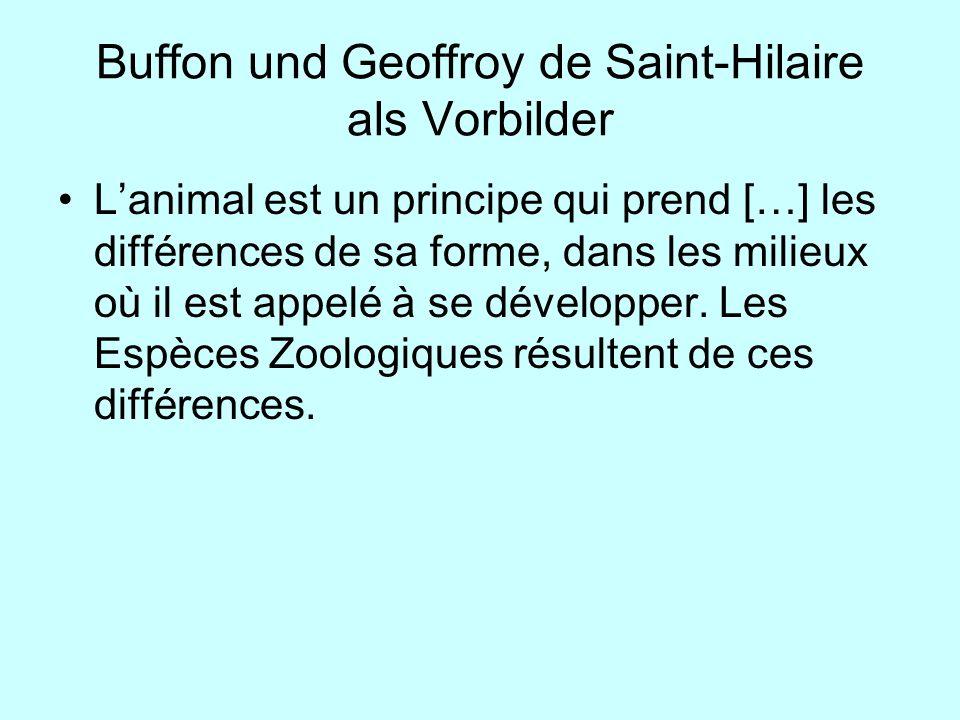 Buffon und Geoffroy de Saint-Hilaire als Vorbilder Lanimal est un principe qui prend […] les différences de sa forme, dans les milieux où il est appel