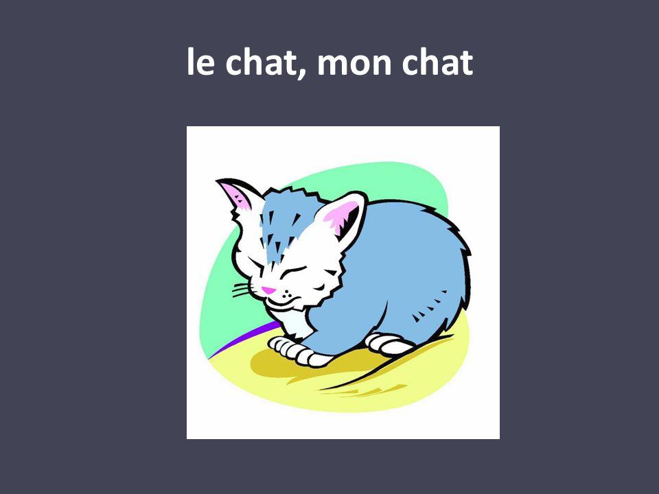 le chat, mon chat