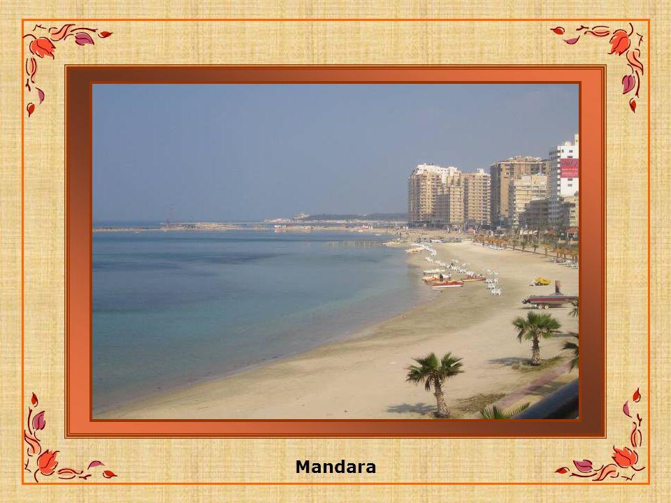 El-Wardany: Ce nom provient dune déformation du mot anglais WARD qui désigne la location des magasins destiné aux douanes.