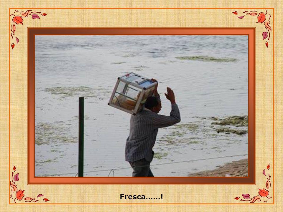Fresca……!