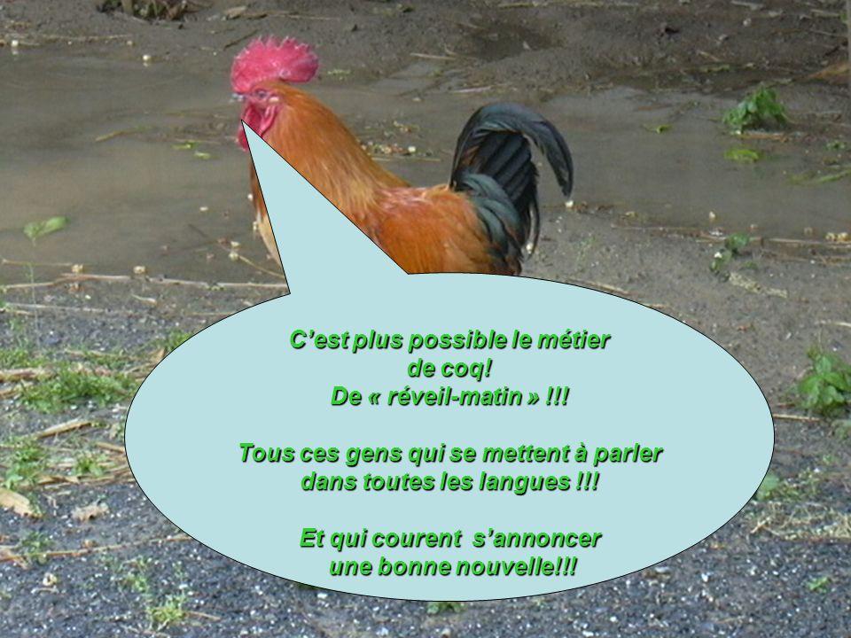 Cest plus possible le métier de coq! De « réveil-matin » !!! Tous ces gens qui se mettent à parler dans toutes les langues !!! Et qui courent sannonce