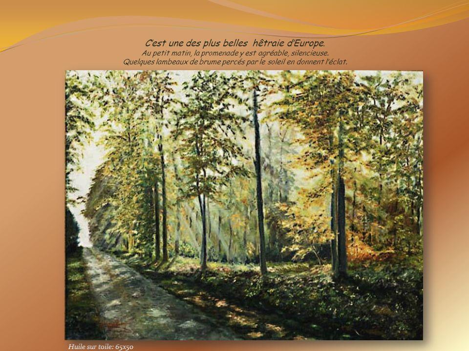 Au travers de mes tableaux Je vous propose une découverte de la forêt La forêt de LYONS dans le Vexin Normand Département de lEure Défilement 20'' aut