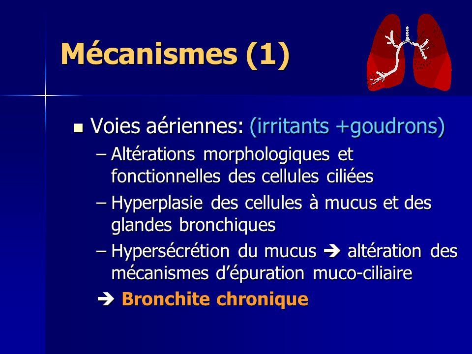Mécanismes (1) Voies aériennes: (irritants +goudrons) Voies aériennes: (irritants +goudrons) –Altérations morphologiques et fonctionnelles des cellules ciliées –Hyperplasie des cellules à mucus et des glandes bronchiques –Hypersécrétion du mucus altération des mécanismes dépuration muco-ciliaire Bronchite chronique Bronchite chronique