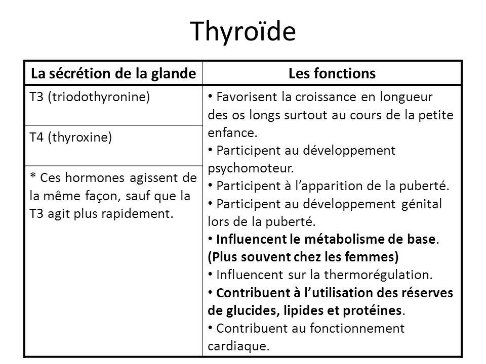 Thyroïde La sécrétion de la glandeLes fonctions T3 (triodothyronine) Favorisent la croissance en longueur des os longs surtout au cours de la petite e