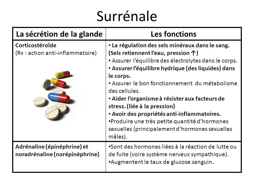 Surrénale La sécrétion de la glandeLes fonctions Corticostéroïde (Rx : action anti-inflammatoire) La régulation des sels minéraux dans le sang. (Sels