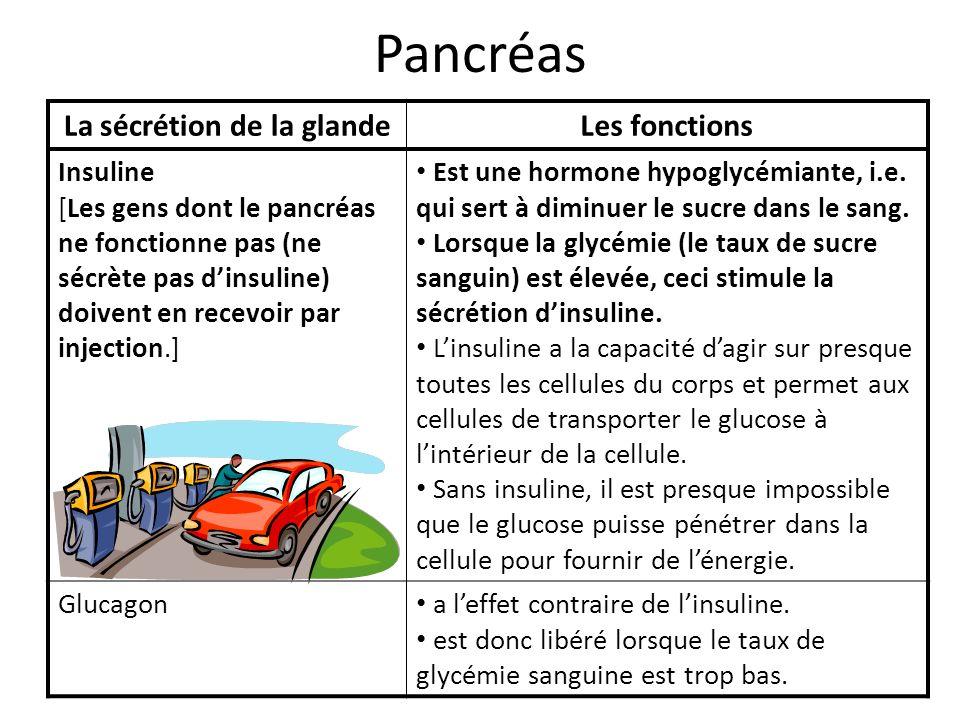 Pancréas La sécrétion de la glandeLes fonctions Insuline [Les gens dont le pancréas ne fonctionne pas (ne sécrète pas dinsuline) doivent en recevoir p