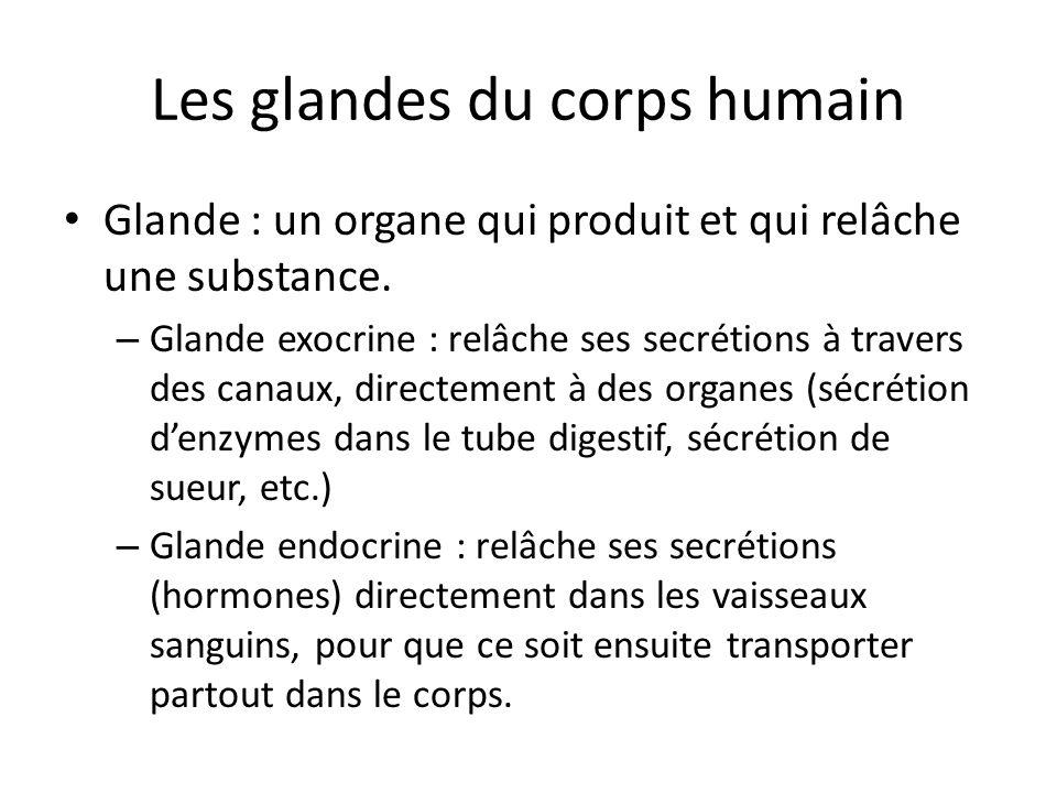 Les glandes du corps humain Glande : un organe qui produit et qui relâche une substance. – Glande exocrine : relâche ses secrétions à travers des cana