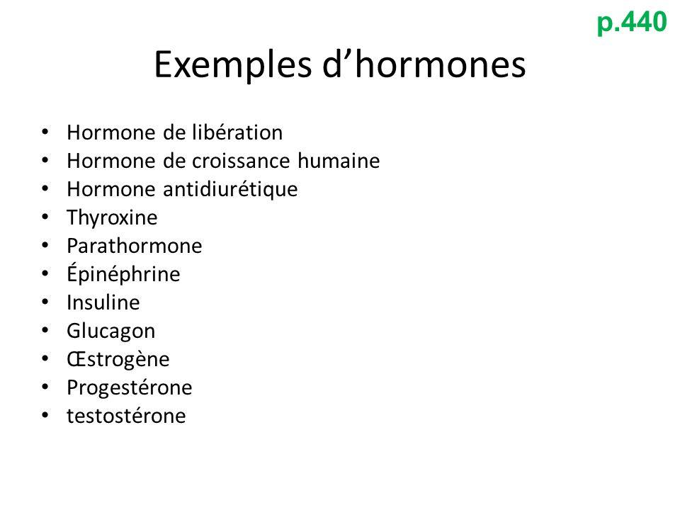 Exemples dhormones Hormone de libération Hormone de croissance humaine Hormone antidiurétique Thyroxine Parathormone Épinéphrine Insuline Glucagon Œst