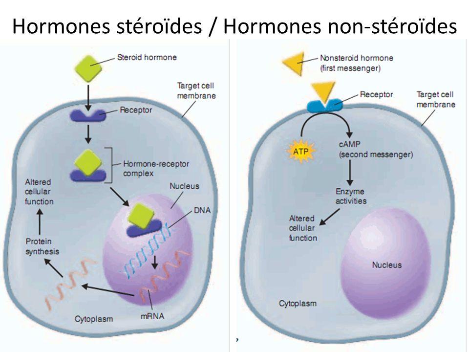 Contrôle de rétroaction (feedback) Le système endocrinien est contrôlé par des mécanismes homéostatiques de rétroactions.