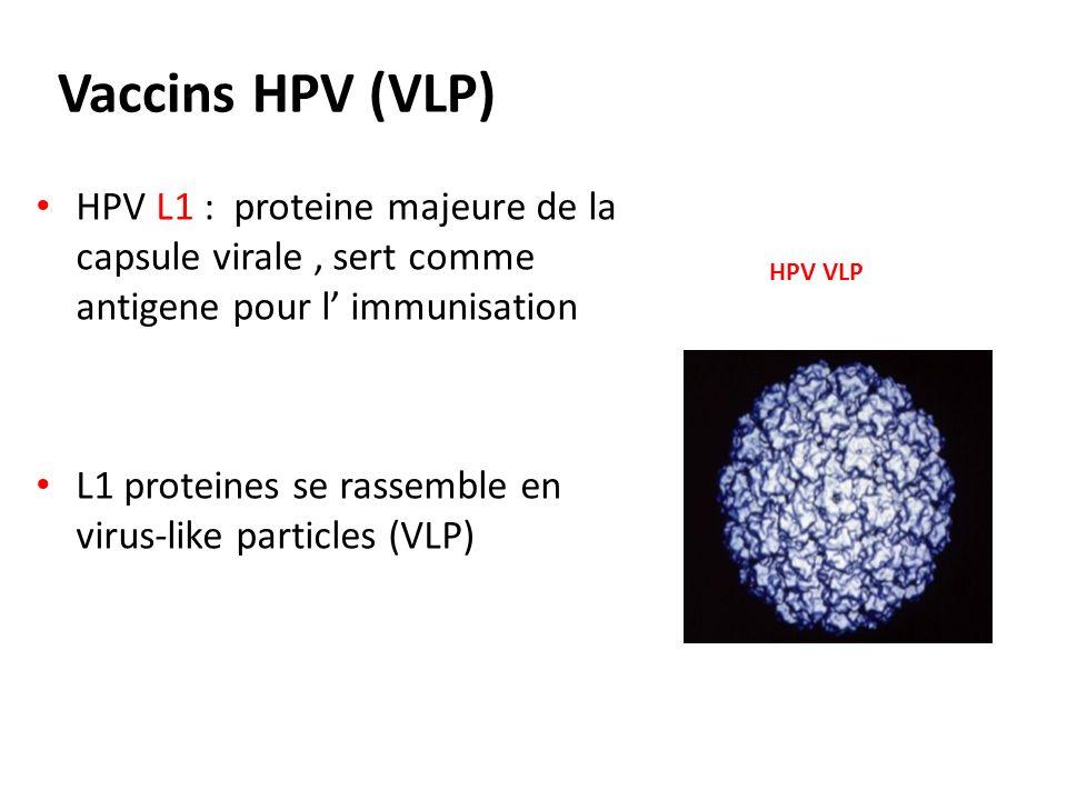 Vaccins HPV (VLP) HPV L1 : proteine majeure de la capsule virale, sert comme antigene pour l immunisation L1 proteines se rassemble en virus-like part