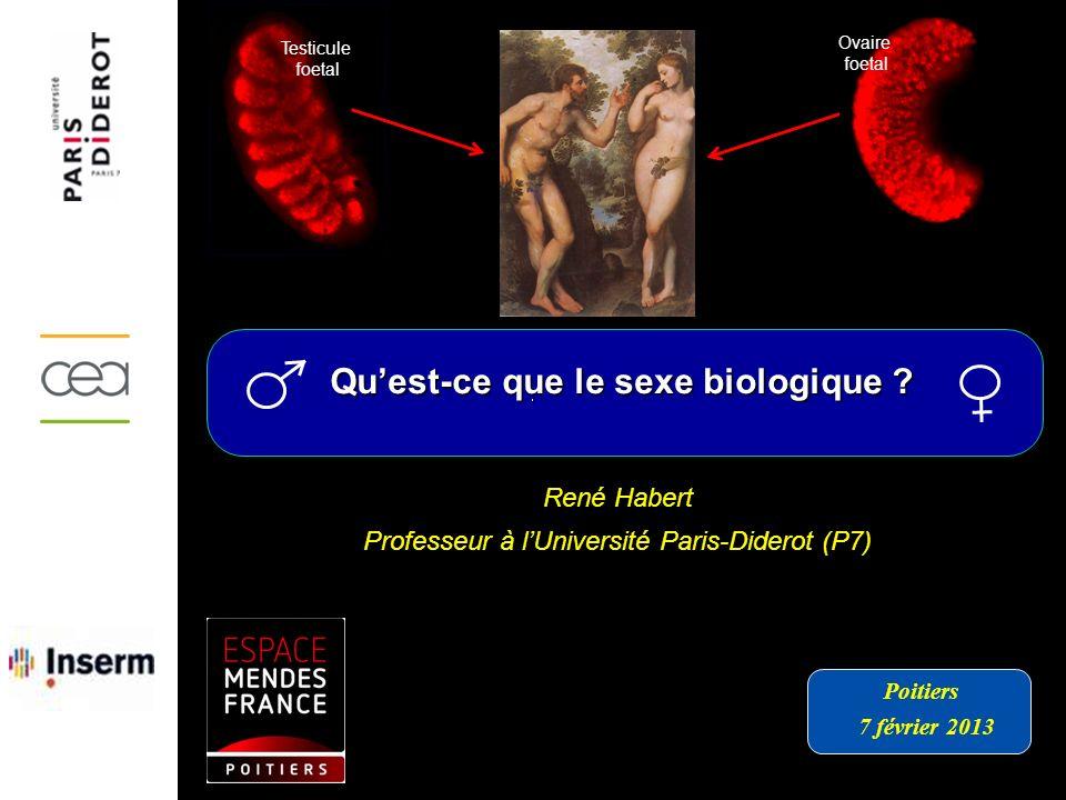 René Habert Professeur à lUniversité Paris-Diderot (P7) Quest-ce que le sexe biologique ? Poitiers 7 février 2013 Testicule foetal Ovaire foetal