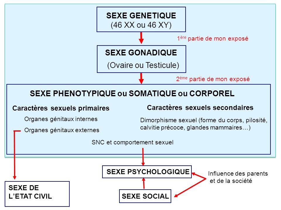 1 ère partie de mon exposé 2 ème partie de mon exposé SEXE GENETIQUE (46 XX ou 46 XY) SEXE GONADIQUE (Ovaire ou Testicule) SNC et comportement sexuel