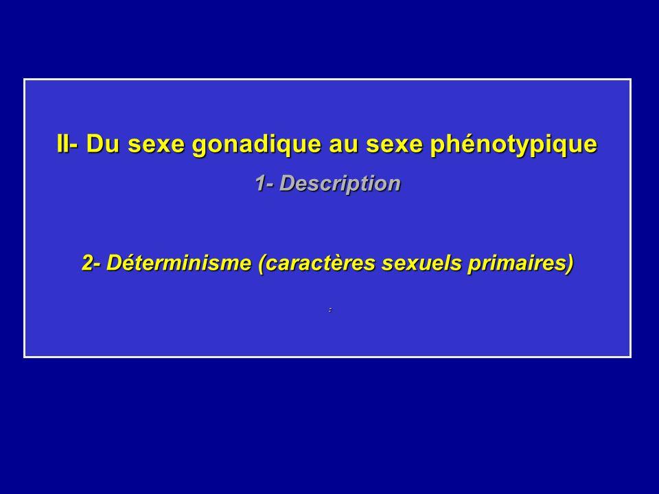 II- Du sexe gonadique au sexe phénotypique 1- Description 2- Déterminisme (caractères sexuels primaires) :