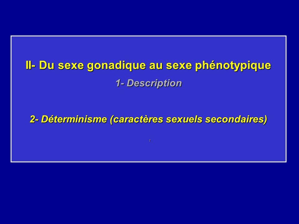 II- Du sexe gonadique au sexe phénotypique 1- Description 2- Déterminisme (caractères sexuels secondaires) :