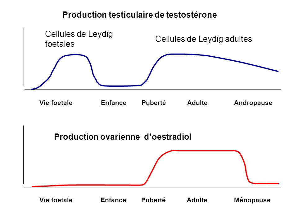 Vie foetaleEnfancePubertéAdulteMénopause Production ovarienne doestradiol Vie foetaleEnfancePubertéAdulteAndropause Production testiculaire de testost
