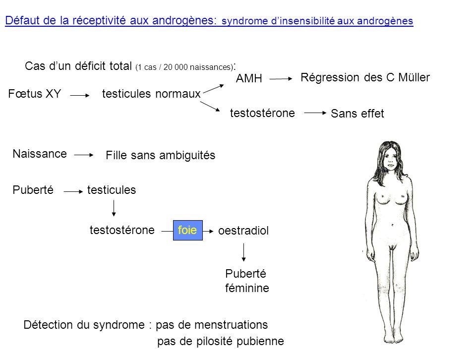 Défaut de la réceptivité aux androgènes: syndrome dinsensibilité aux androgènes Cas dun déficit total (1 cas / 20 000 naissances) : Fœtus XYtesticules