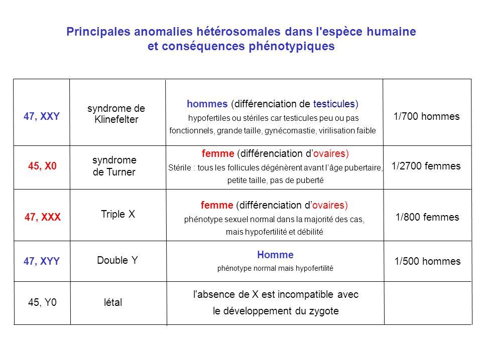 Principales anomalies hétérosomales dans l'espèce humaine et conséquences phénotypiques 47, XXY syndrome de Klinefelter hommes (différenciation de tes