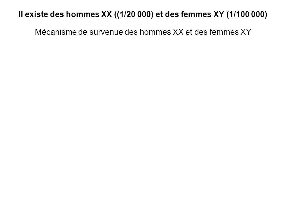 Mécanisme de survenue des hommes XX et des femmes XY Il existe des hommes XX ((1/20 000) et des femmes XY (1/100 000)