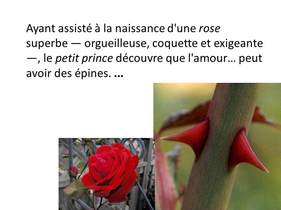 Ayant assisté à la naissance d'une rose superbe orgueilleuse, coquette et exigeante, le petit prince découvre que l'amour… peut avoir des épines....