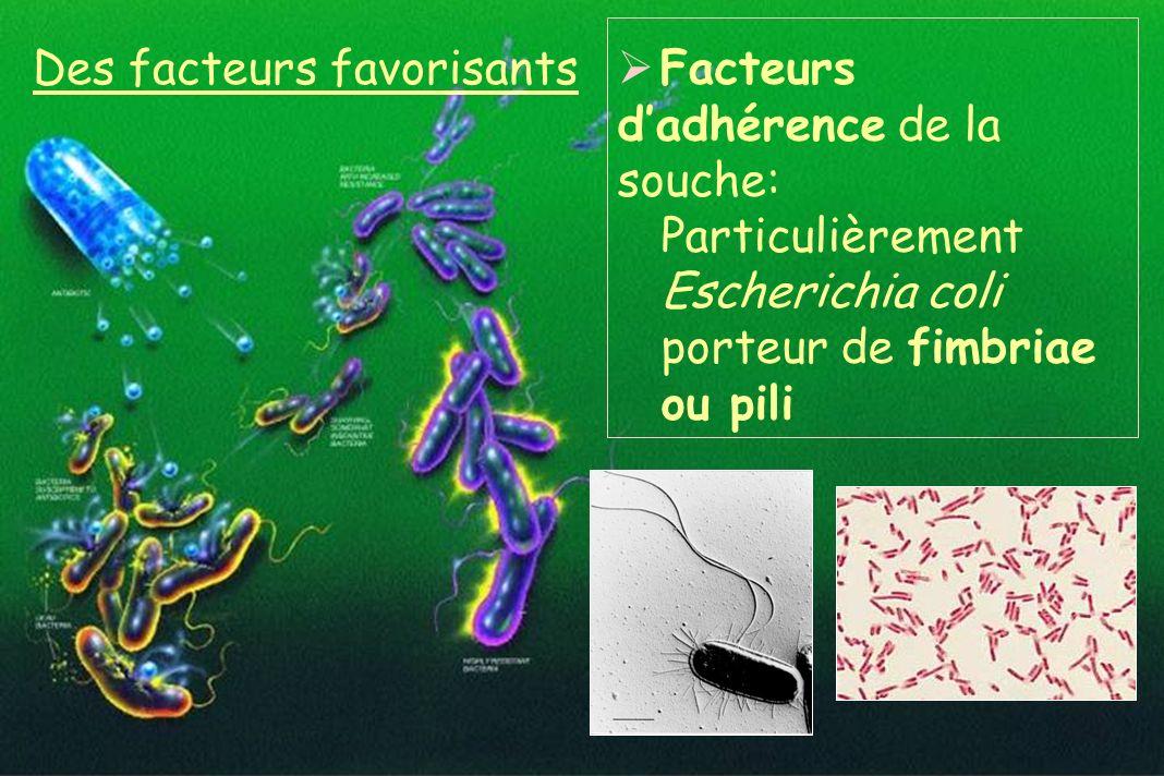 Des facteurs favorisants Facteurs dadhérence de la souche: Particulièrement Escherichia coli porteur de fimbriae ou pili