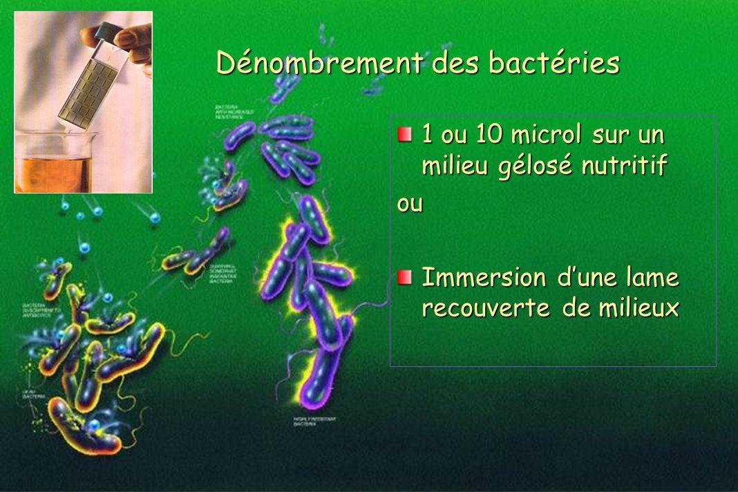 Dénombrement des bactéries 1 ou 10 microl sur un milieu gélosé nutritif ou Immersion dune lame recouverte de milieux