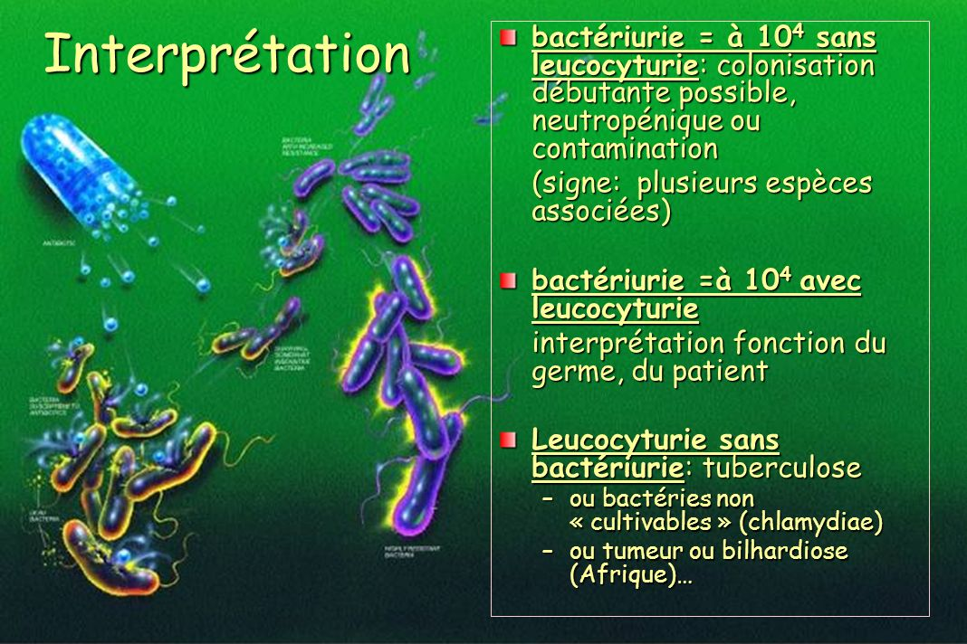 Interprétation bactériurie = à 10 4 sans leucocyturie: colonisation débutante possible, neutropénique ou contamination (signe: plusieurs espèces assoc