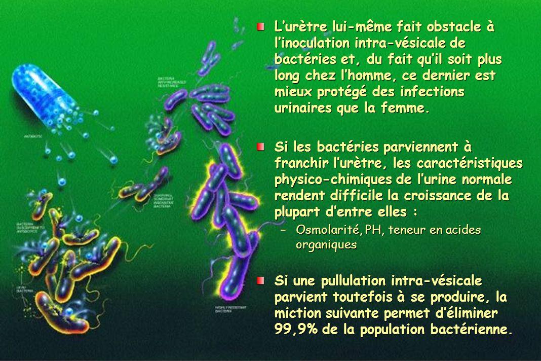 Lurètre lui-même fait obstacle à linoculation intra-vésicale de bactéries et, du fait quil soit plus long chez lhomme, ce dernier est mieux protégé de