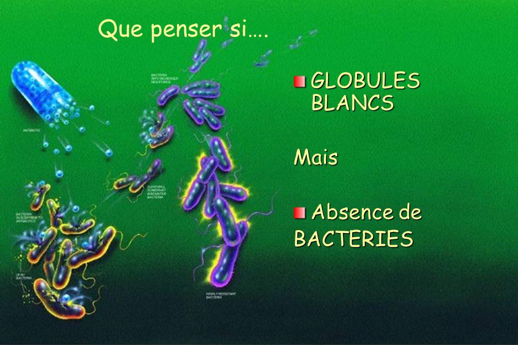 GLOBULES BLANCS Mais Absence de BACTERIES Que penser si….