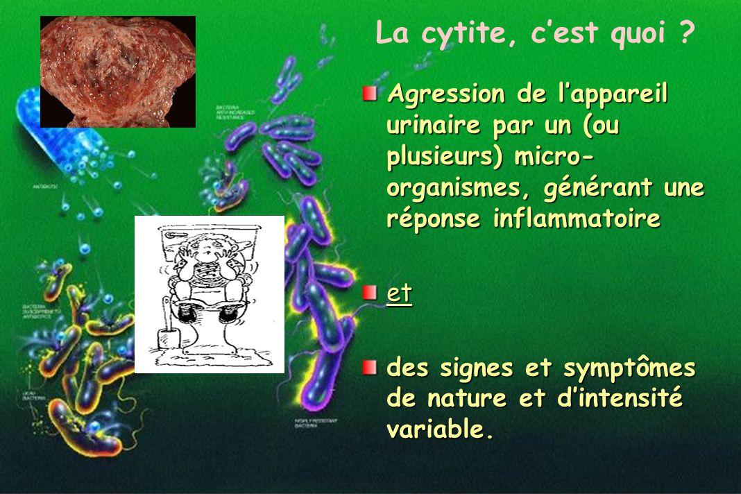 Agression de lappareil urinaire par un (ou plusieurs) micro- organismes, générant une réponse inflammatoire et des signes et symptômes de nature et di