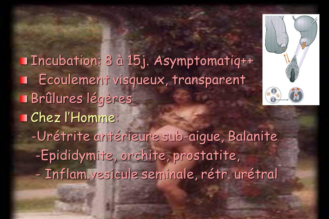 Incubation: 8 à 15j. Asymptomatiq++ Ecoulement visqueux, transparent Ecoulement visqueux, transparent Brûlures légères Chez lHomme: -Urétrite antérieu