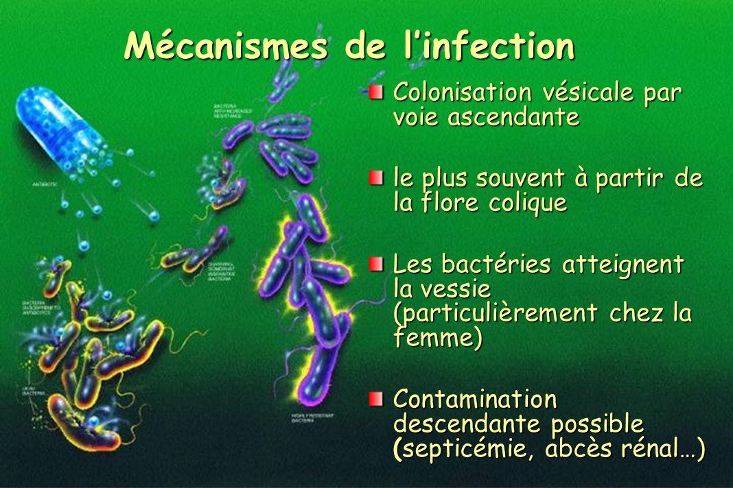 Colonisation vésicale par voie ascendante le plus souvent à partir de la flore colique Les bactéries atteignent la vessie (particulièrement chez la fe