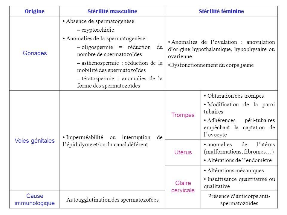 OrigineStérilité masculineStérilité féminine Gonades Absence de spermatogenèse : – cryptorchidie Anomalies de la spermatogenèse : – oligospermie = réd