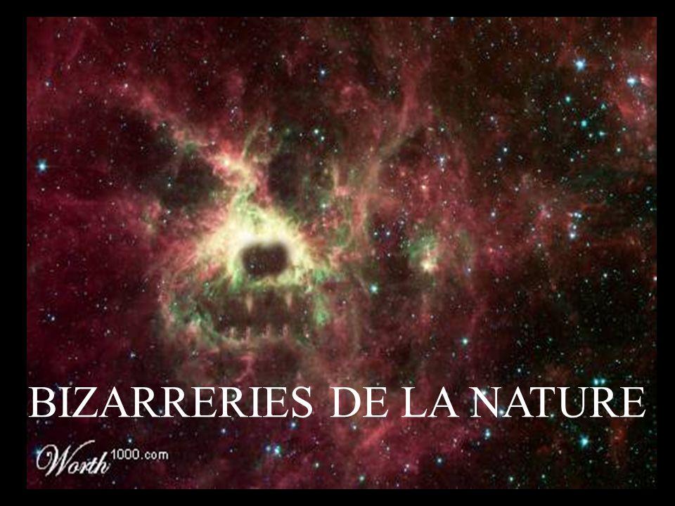 BIZARRERIES DE LA NATURE