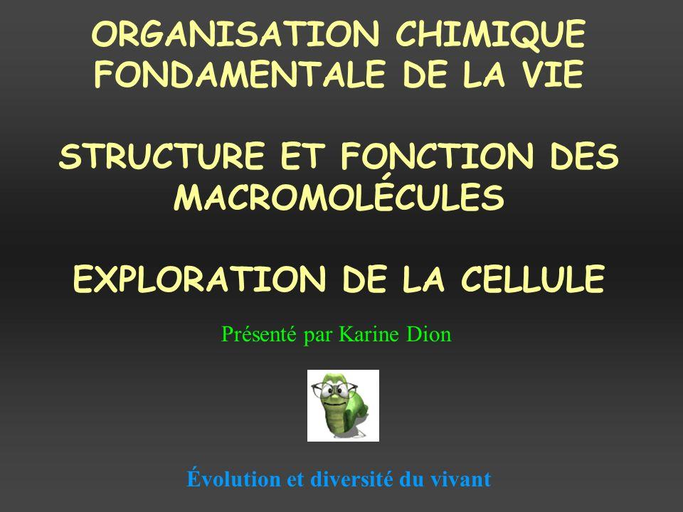 ORGANISATION CHIMIQUE FONDAMENTALE DE LA VIE STRUCTURE ET FONCTION DES MACROMOLÉCULES EXPLORATION DE LA CELLULE Présenté par Karine Dion Évolution et