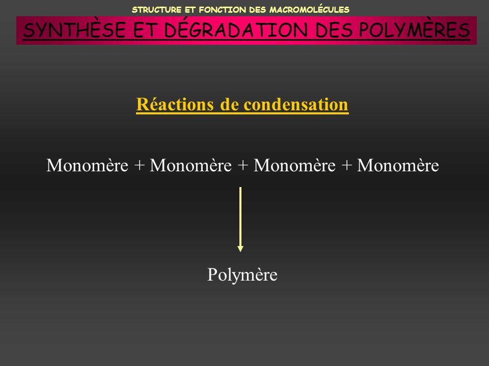 Réactions de condensation Monomère + Monomère + Monomère + Monomère Polymère SYNTHÈSE ET DÉGRADATION DES POLYMÈRES