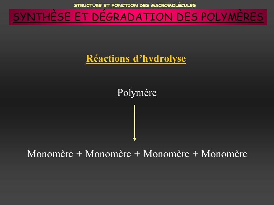 STRUCTURE ET FONCTION DES MACROMOLÉCULES Réactions dhydrolyse Polymère Monomère + Monomère + Monomère + Monomère SYNTHÈSE ET DÉGRADATION DES POLYMÈRES