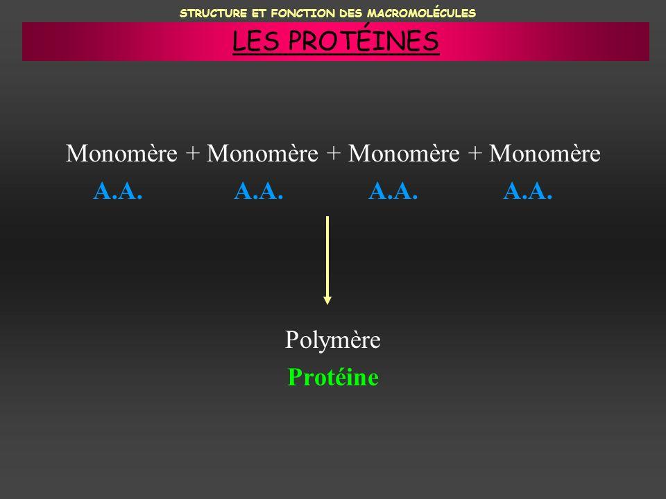 Monomère + Monomère + Monomère + Monomère A.A. A.A. A.A. A.A. Polymère Protéine STRUCTURE ET FONCTION DES MACROMOLÉCULES LES PROTÉINES