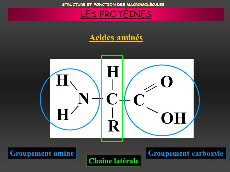 STRUCTURE ET FONCTION DES MACROMOLÉCULES Acides aminés Groupement amineGroupement carboxyle Chaîne latérale LES PROTÉINES