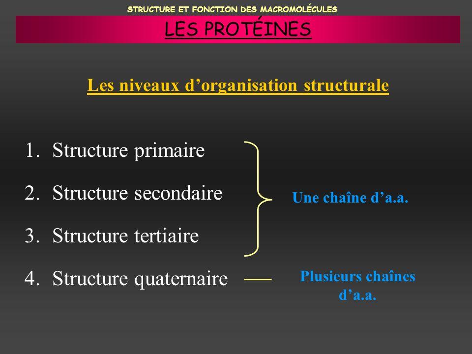 STRUCTURE ET FONCTION DES MACROMOLÉCULES Les niveaux dorganisation structurale 1.Structure primaire 2.Structure secondaire 3.Structure tertiaire 4.Str